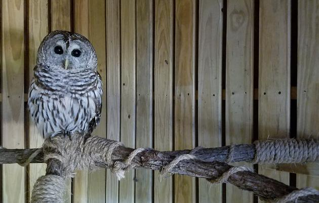 Owl Adoption Party Weekend (Saturday & Sunday)
