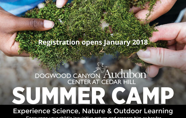 Summer Camp - Camp Cedar Hill