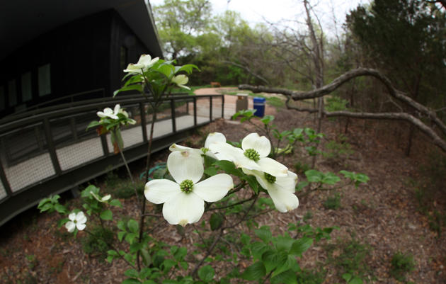 Visiting Dogwood Canyon Audubon Center