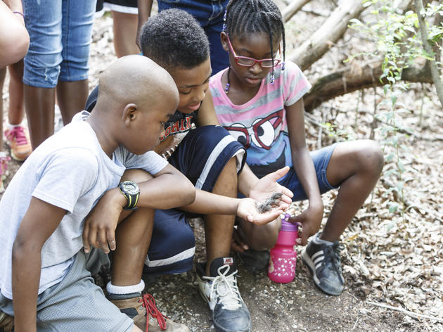 Eco Investigations with Reptile Encounter