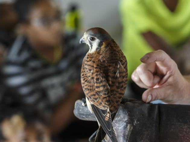 Eco Investigations with Live Bird of Prey Encounter