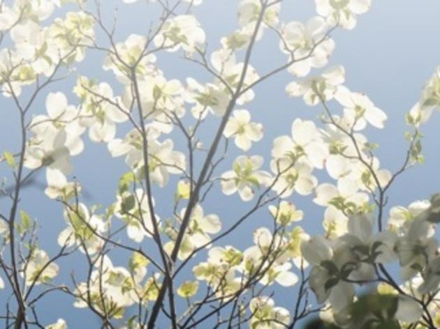 Dogwood Blooms Guided Hikes