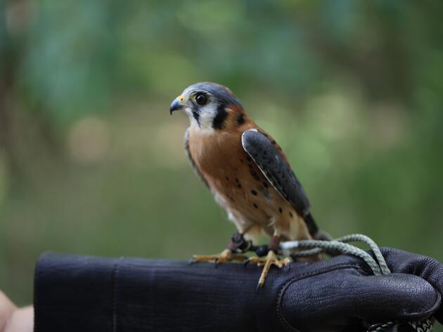 Private Live Bird of Prey Encounter
